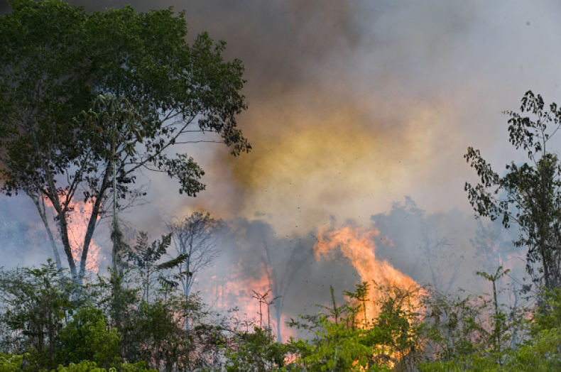 'Stop the Burning of Amazon Rainforest' petition garners over 755,000 signatures