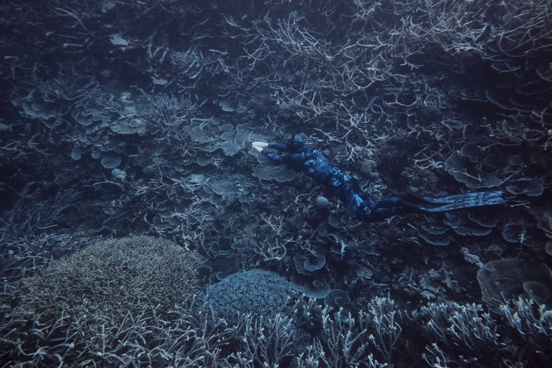 Blue Sink Hole Great Barrier Reef