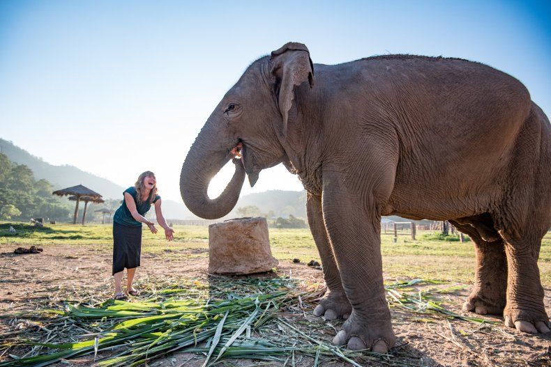 Intrepid Travel elephant chiang mai thailand