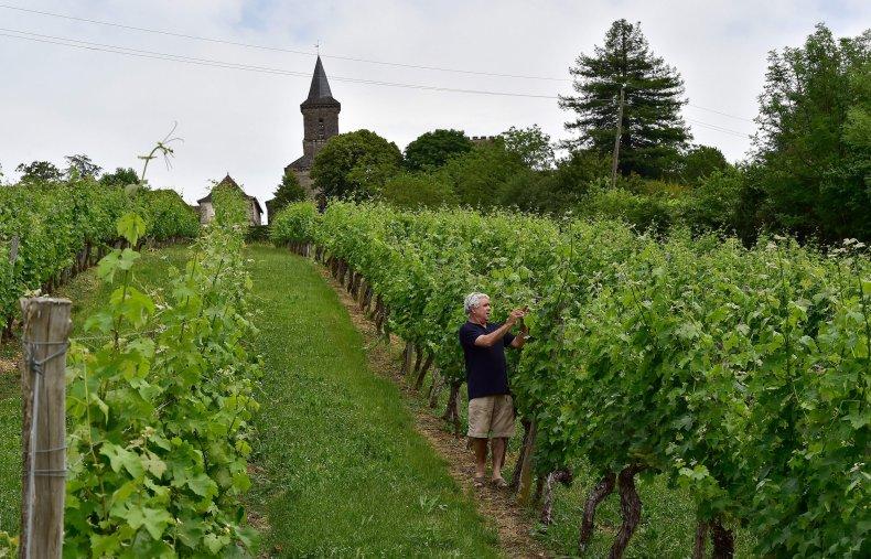 OrganiC Vineyard  France
