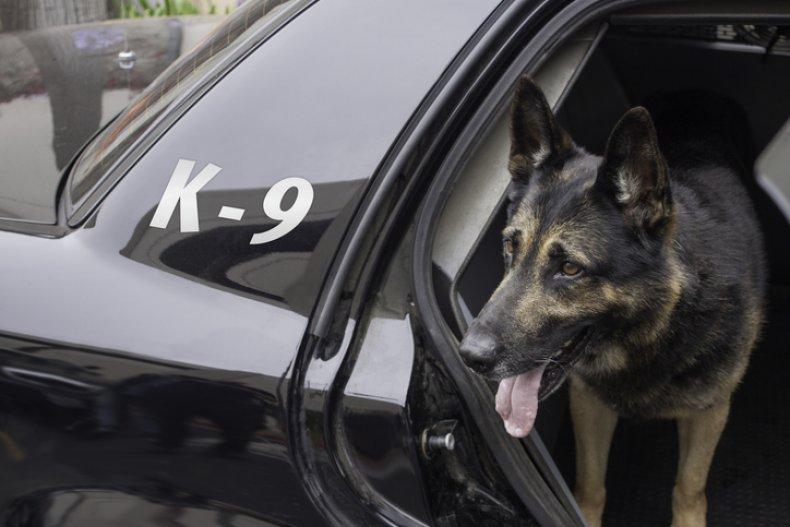 Stock image of police dog