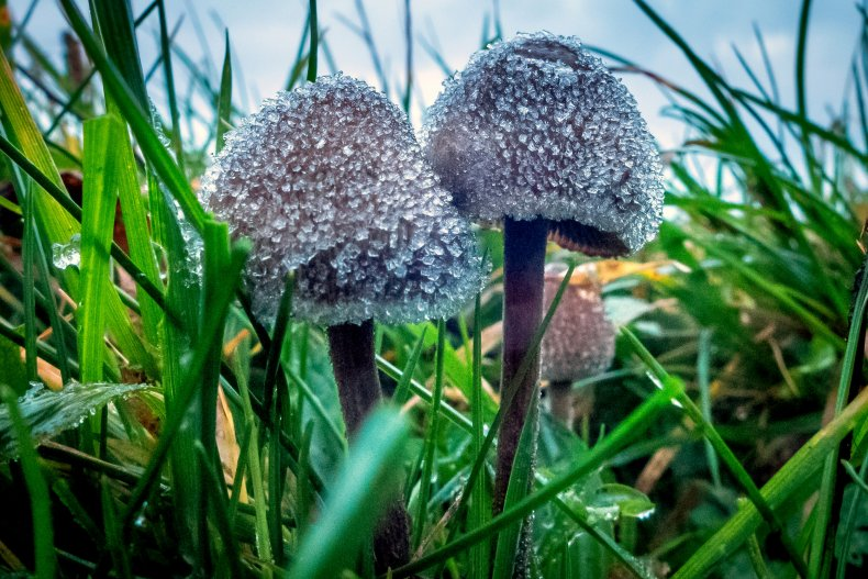 psychedelic-magic-mushrooms-shroom