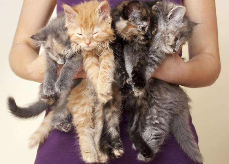 cats, kittens, cat lady, stock, getty,