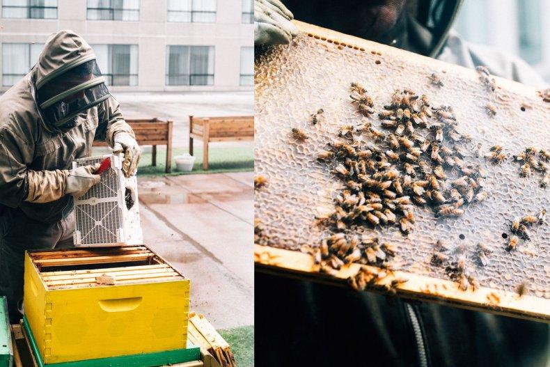 beehive bees marriott