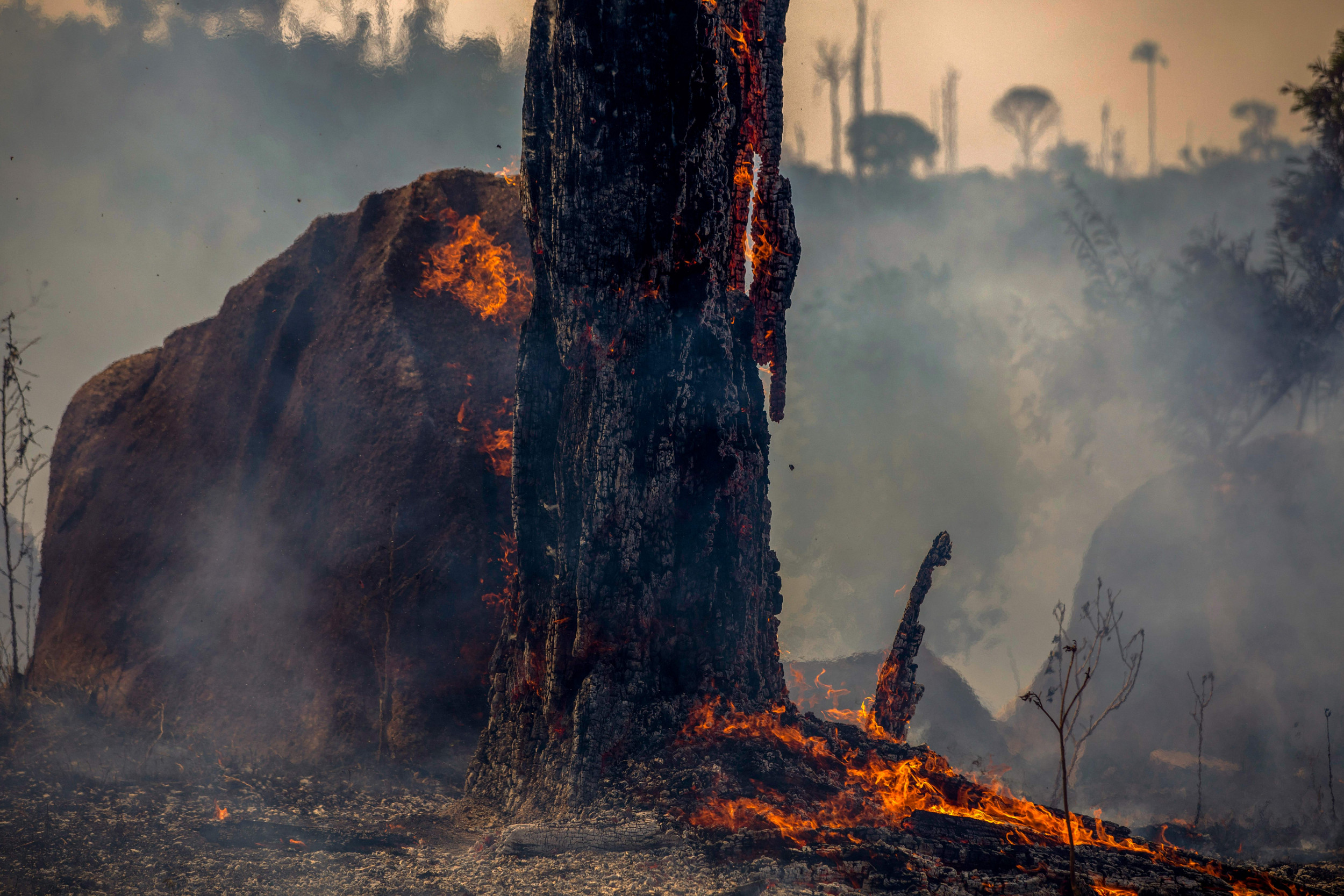 Amazon Rainforest Fires Are Only Going To Get Worse Opinion