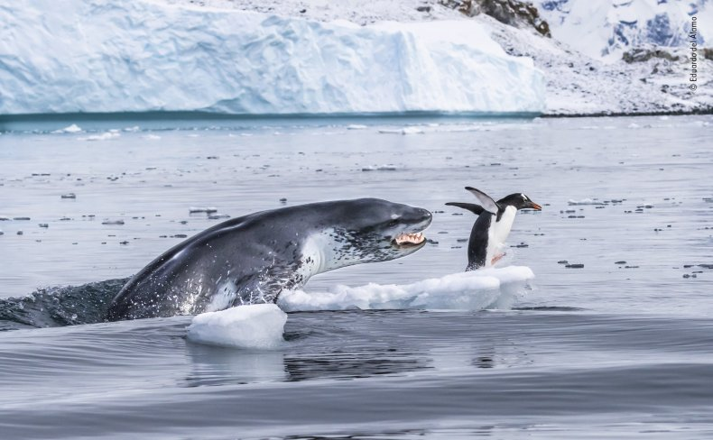 Seal Penguin NHM