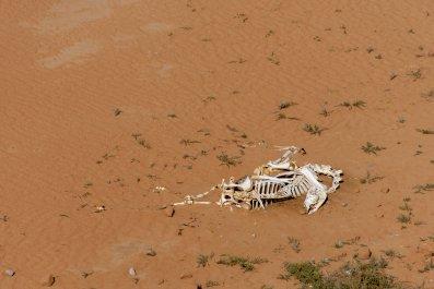 animal, skeleton, desert