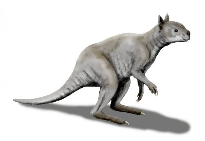 ancient kangaroo