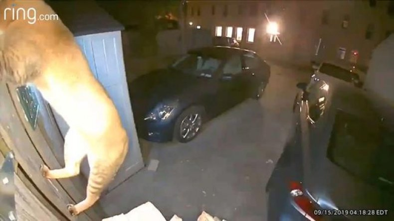 Cat caught on Georgetown security camera