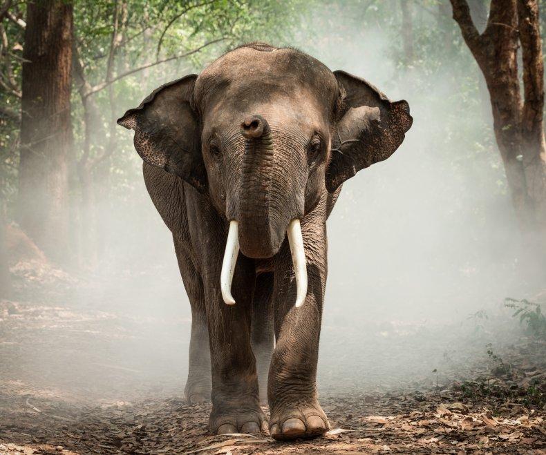 Elephant Appreciation Day 2019