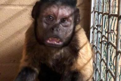 Vern Monkey
