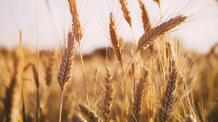 Climate Change May Hit Wheat Production, Cause Spike in Food Prices - Newsweek