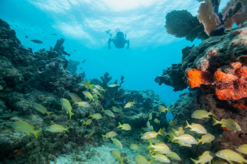 coral reef, disease, oceans, key west