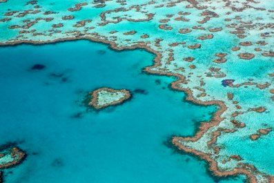 great barrier reef, australia, coral, stock, getty