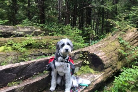 woman hiker dog rescue