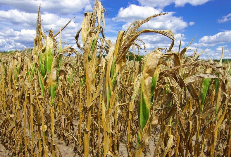 drought, U.S., crops, farmers