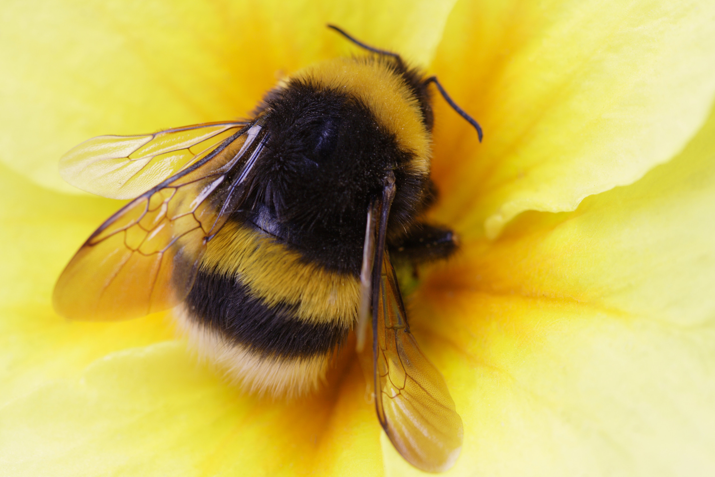 Bumble Bees Give up Sleep to Care for Young, Even When ...