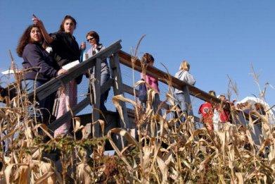 Corn Maze in Sterling, Massachusetts.