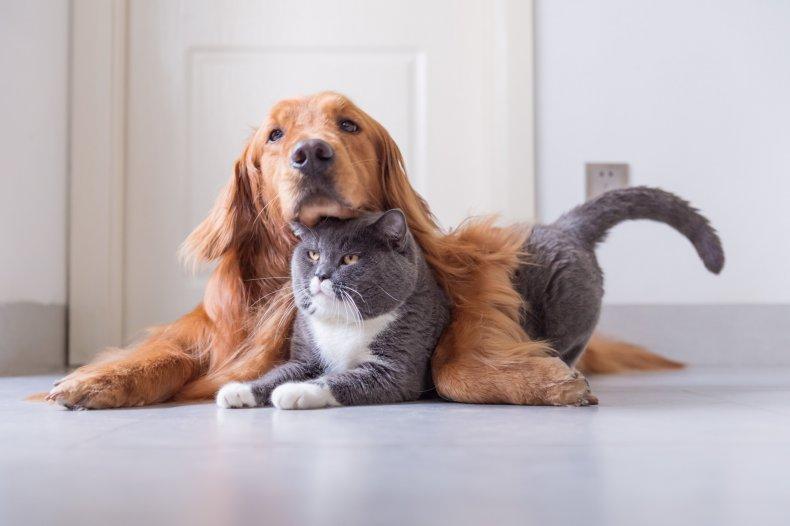 dog, cat