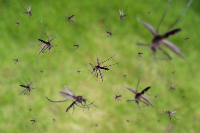 mosquito, virus, dengue, EEE, epidemic