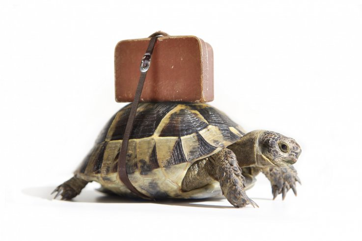 tortoise with a suitcase