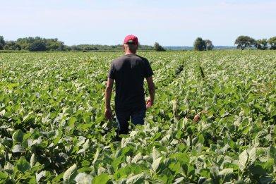 farmer soy fields