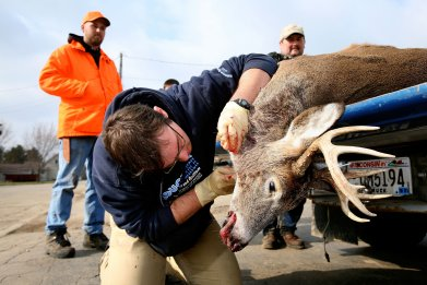 zombie deer disease, chronic wasting disease