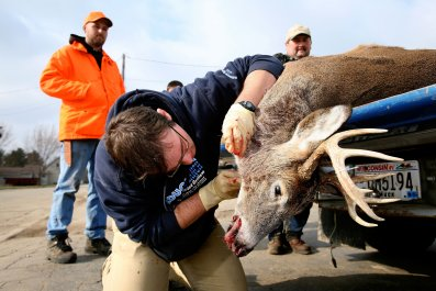 zombie deer disease, chronic wasting disease