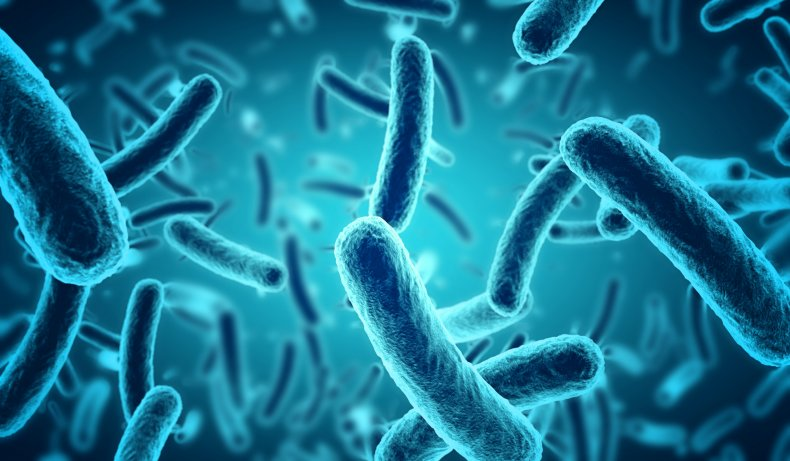 bacteria, salmonella, bacterial resistance, food poisoning