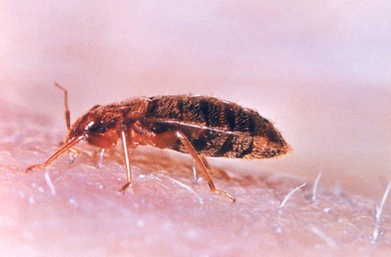 Bed Bug Summit Trending Doral