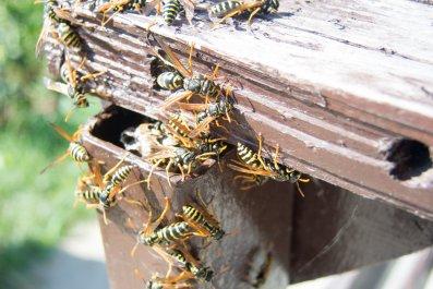 Hornets file image