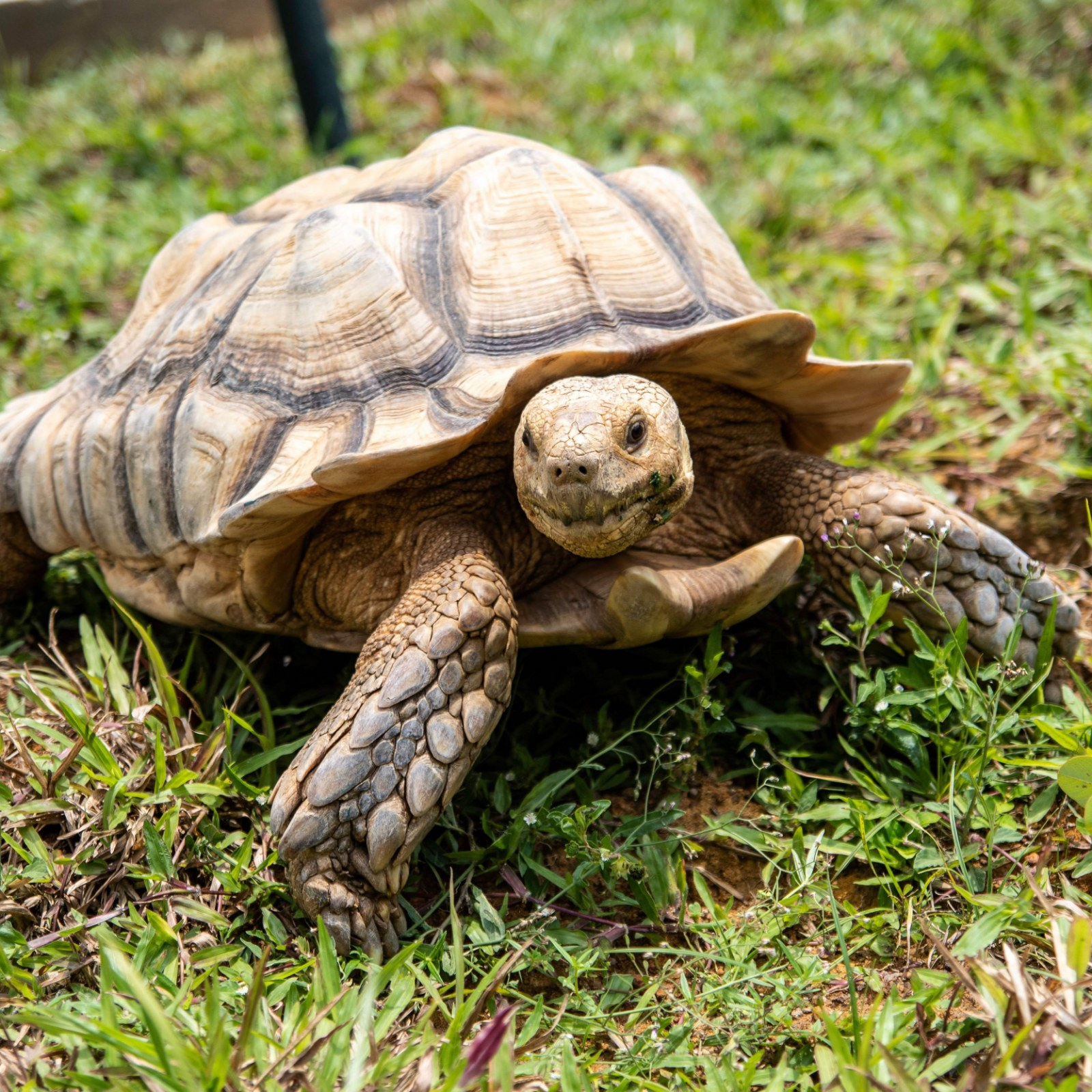 Turtle Goes Missing For A Week Is Found To Have Traveled 5 Miles Back To Its Former Home Wow This Really Happened