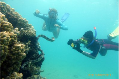 snorkeling for sea snakes