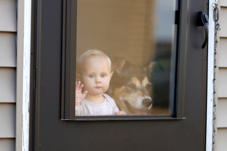 baby, girl, dog, pet, home, neglect, stock,getty