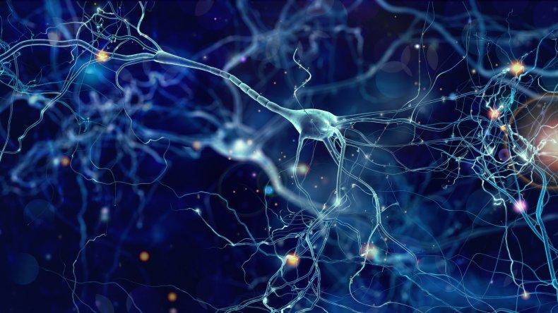 brain cells, neurons
