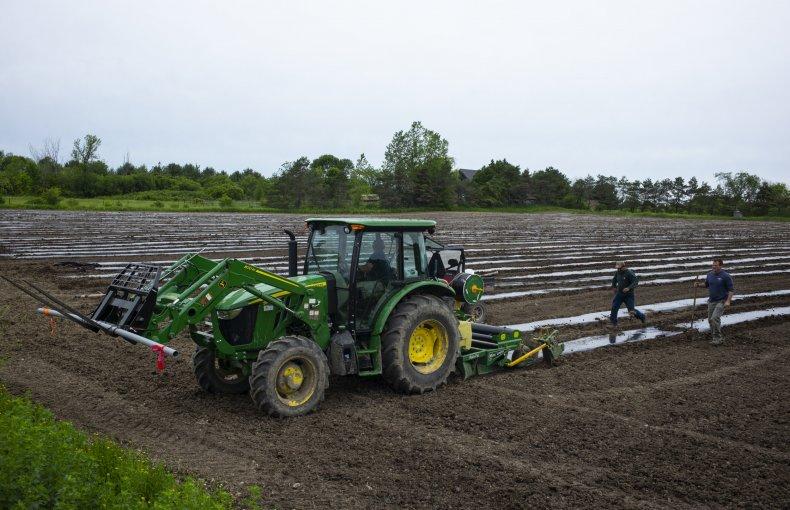 Farmers Grow Hemp for CBD Oil