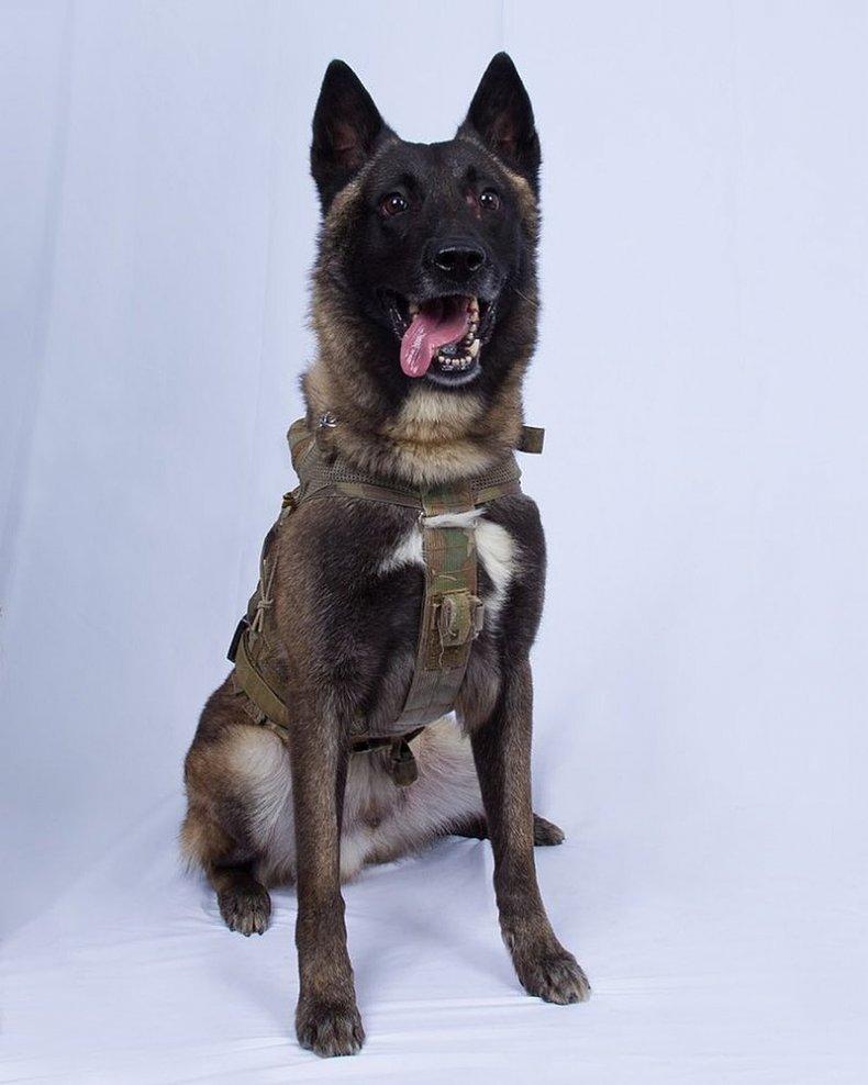 conan dog