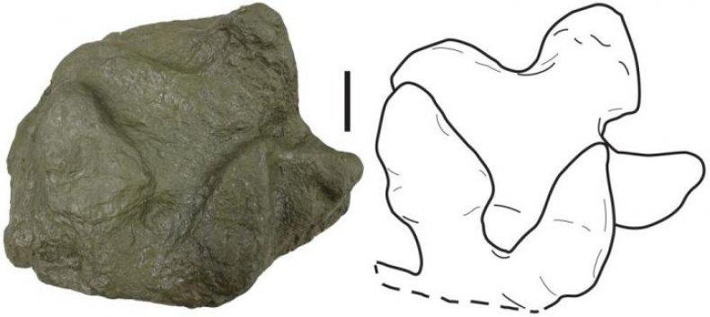 dinosaur footprints, Alaskan Peninsula