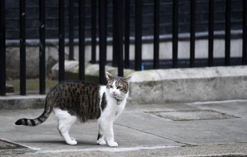 Quilty cat