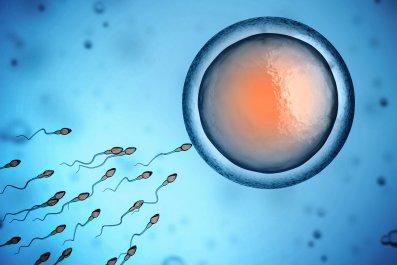 sperm and fertilization stock image