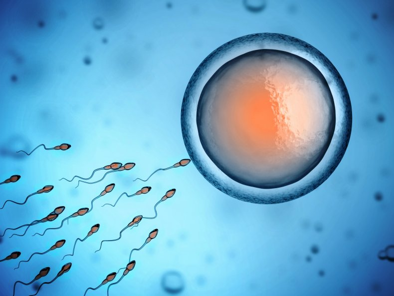 sperm and fertilization stock image