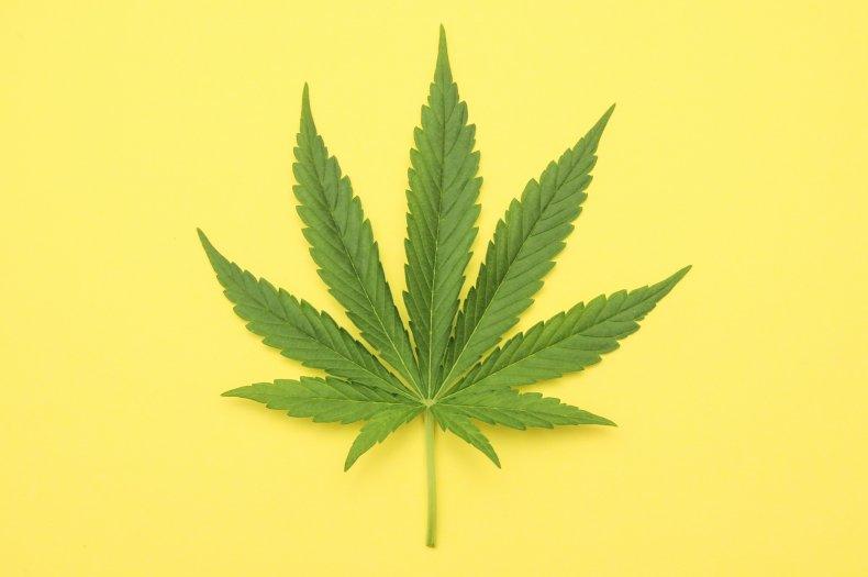 cannabis, marijuana, weed, drugs, stock getty