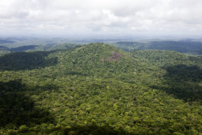 Amazon rainforest, French Guiana