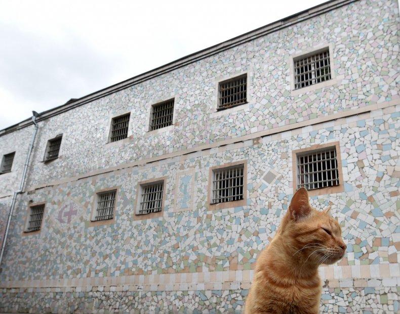 A cat outside a prison