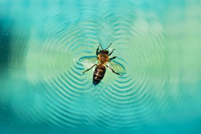 bee, insect, water, stock, getty