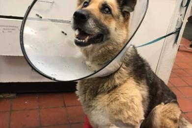 Rescued dog Zoe