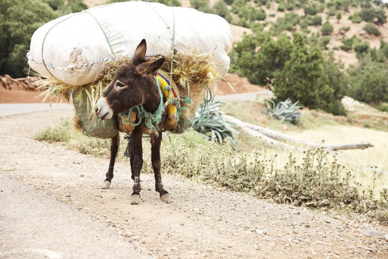 A donkey carrying bags