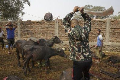 Gadhimai festival Nepal