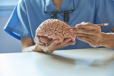 doctor holds human brain model