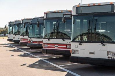 row of buses